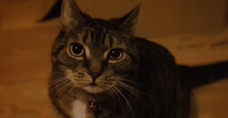 Samsung Galaxy Note 8 camera sample cat