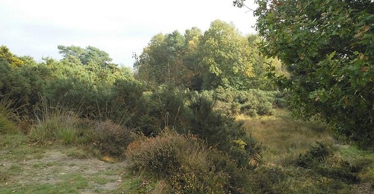 Nokia-8-camera-sample-bushes