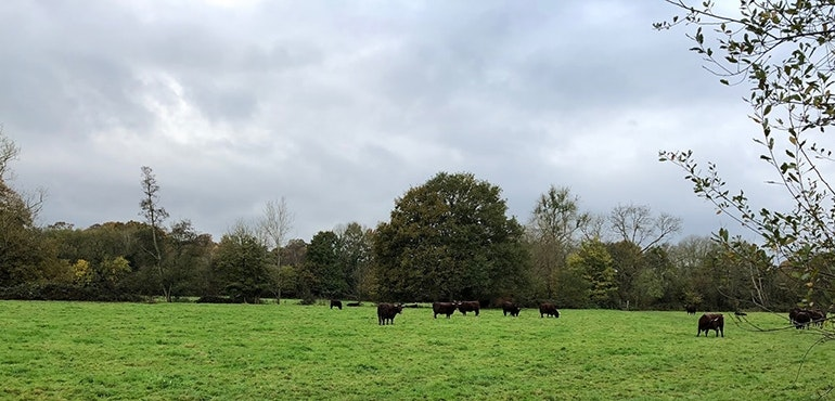 iPhone-X-camera-sample-field-of-cows