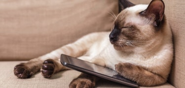 Pets gadget gift guide 2017
