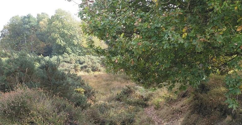 Nokia-8-camera-sample-trees