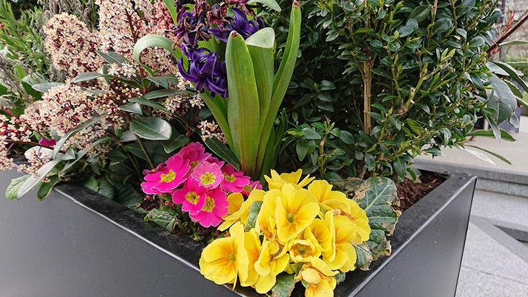 Sony-Xperia-XZ2-camera-sample-plant-pot